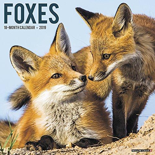 Foxes 2019 Wall Calendar