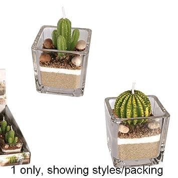 Amazon De Kaktus Dekor Kerzen Im Glas Mit Sand Stein Dekoration