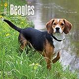 Beagles 2017 Mini 7x7