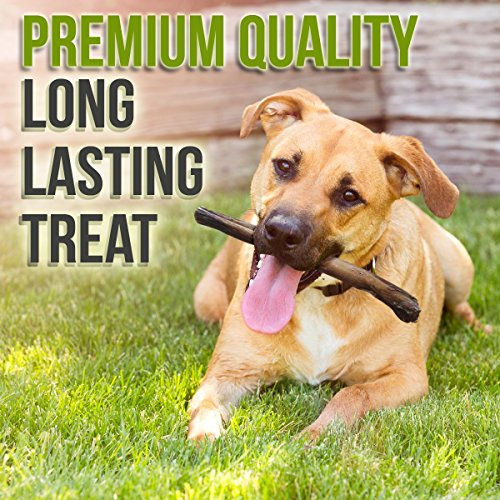 bullysticks organic best 6 inch bully sticks for dogs big import it all. Black Bedroom Furniture Sets. Home Design Ideas