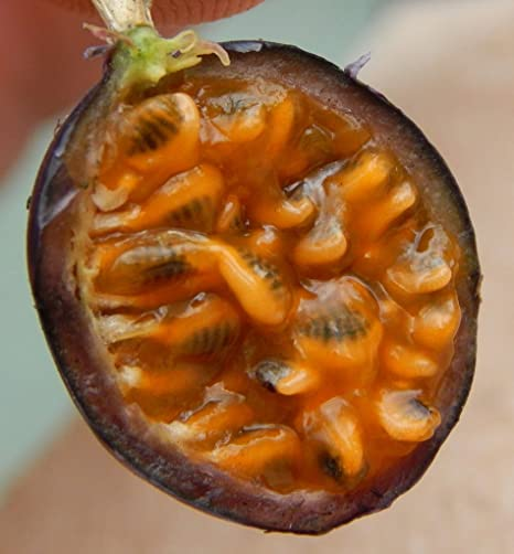 25 Seeds Passion Fruit  Orange