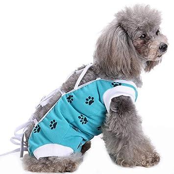 Amazon.com: MORYSONG Traje de recuperación para perros ...