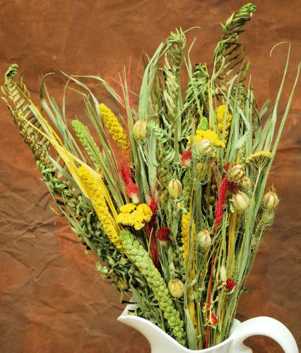 Dried Flower Bouquet - Painted Desert Bunch Top Diameter 11-12in. Stem Length 22-24in. -- Case of 12 bunches by CCC