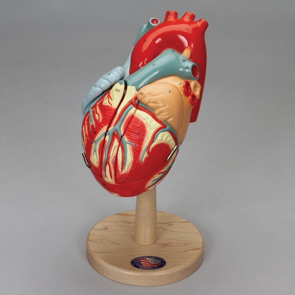 Denoyer-Geppert The Heart of America Model by Denoyer-Geppert (Image #1)