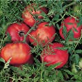 David's Garden Seeds Tomato Slicing Silvery Fir Tree (Red-Orange) 50 Open Pollinated Seeds