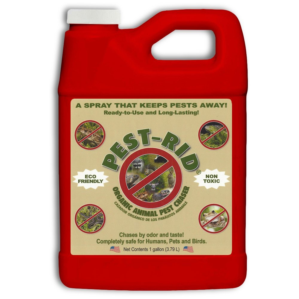 Pest Rid Ready to Use Pest Control Refill Pack, 1-Gallon by BED-BUG-RID