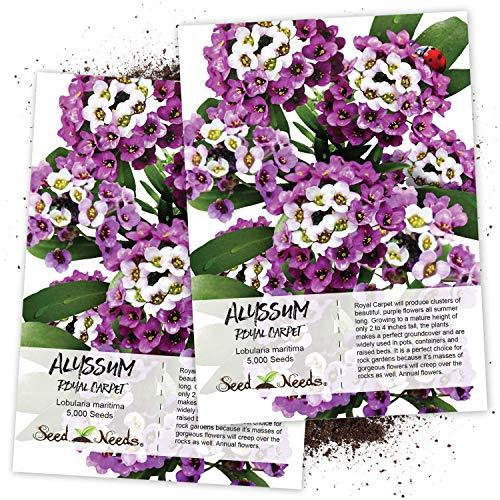 Seed Needs Royal Carpet Alyssum Lobularia maritima Twin Pack of 5000 Seeds Each