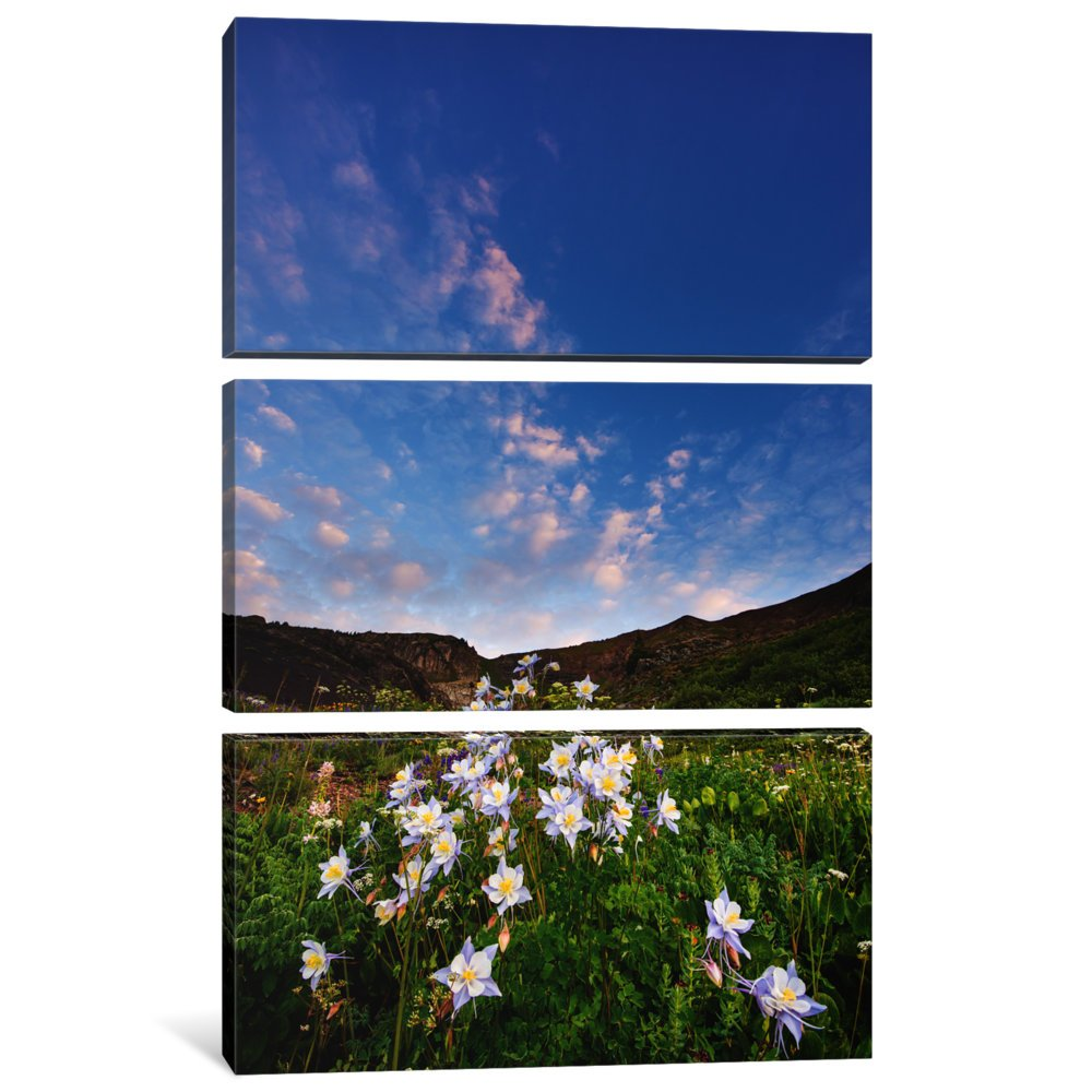 1.5 x 40 x 60-Inch iCanvasART 3-Piece Columbine Morning I Canvas Print by Dan Ballard