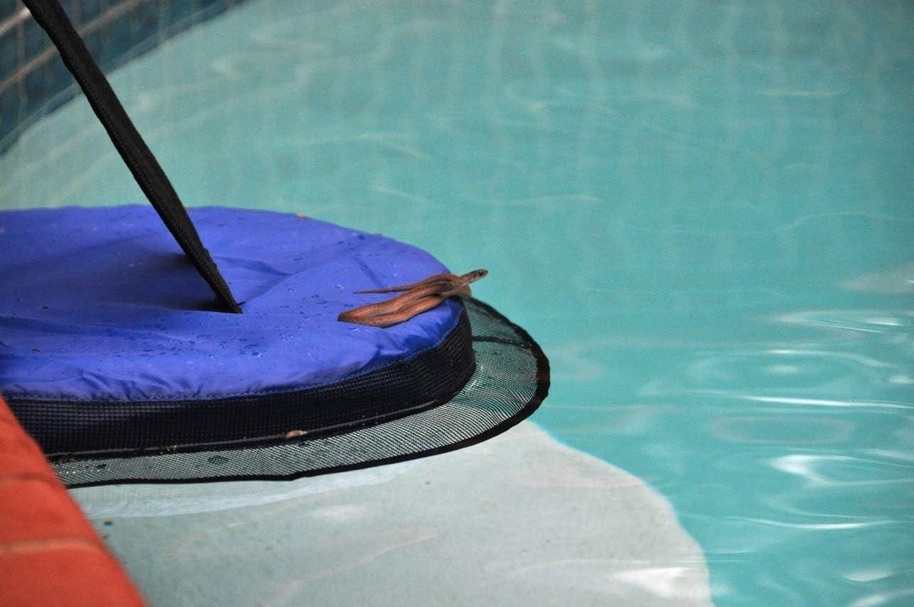 FrogLog, salva animales piscina: Amazon.es: Juguetes y juegos