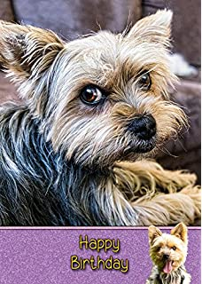 Cairn Terrier Birthday Card 8