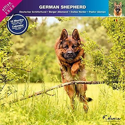 Calendrier Allemand 2020.Berger Allemand 2020 Calendrier Affixe German Shepherd