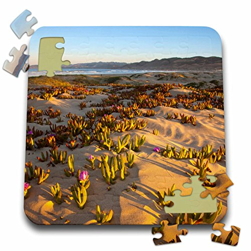 Danita Delimont - California - Sunrise, dunes at Pismo Beach, California - US05 CHA0076 - Chuck Haney - 10x10 Inch Puzzle - Coast Pismo