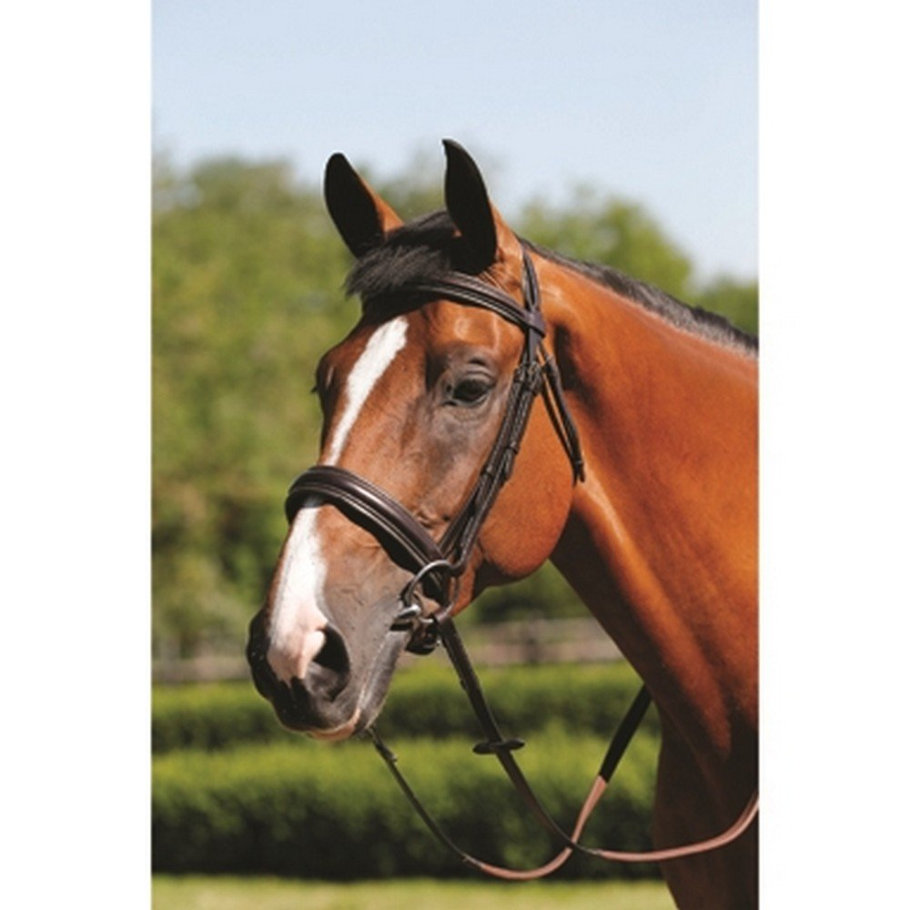 Brown Pony Brown Pony Mark Todd Padded Cavesson Bridle