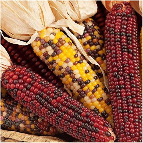200 Seeds, Indian Corn Seeds, Ornamental Mixture (Zea mays)