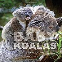 Baby Koalas Calendar 2019: 16 Month Calendar