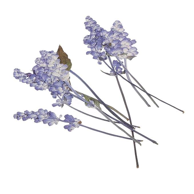 Ipotch Getrocknete Blumenblätter Echte Natürliche