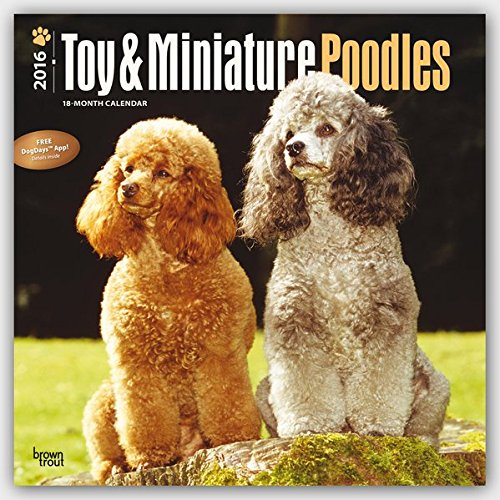 Toy and Miniature Poodles 2016 - Toypudel und Zwergpudel - 18-Monatskalender mit freier DogDays-App: Original BrownTrout-Kalender [Mehrsprachig] [Kalender] (Wall-Kalender)
