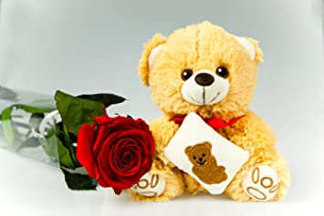 Rosen Te Amo Ewige Rote Rose 55 Cm Groß Mit Braunem Teddybär