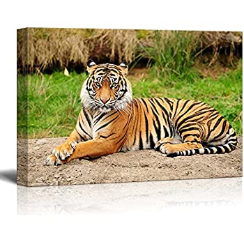 Canvas Prints Wall Art - A Royal Bengal Tiger in The Wild | Modern Wall Decor/Home Decoration Stretched Gallery Canvas Wrap Giclee Print & Ready to Hang - 24