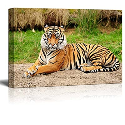 Charming Composition, A Royal Bengal Tiger in The Wild Wall Decor, Premium Product