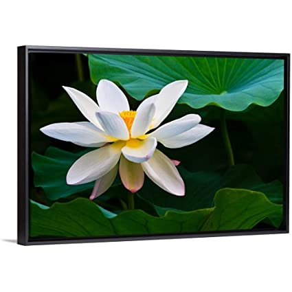 Amazoncom Floating Frame Premium Canvas With Black Frame Wall Art