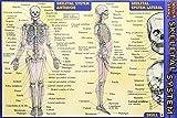 Skeletal System (Quickstudy)