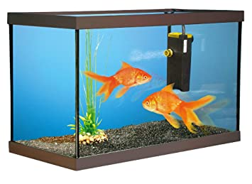 aquarium 40 litres poisson rouge. Black Bedroom Furniture Sets. Home Design Ideas
