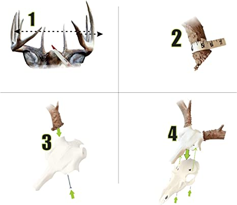 Mountain MikeS Reproductions MMR SD Hunting-Trophy-Mounts Brown