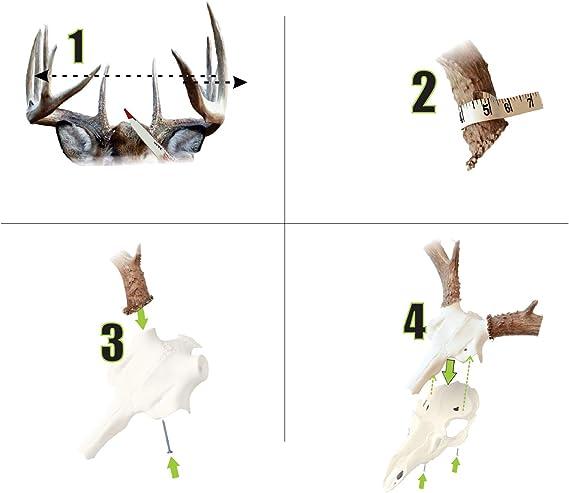 Mountain Mike/'s Reproductions Elk Skull Master Antler Mounting Kit for sale online
