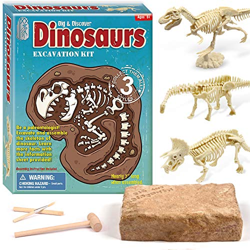 XX Dinosaur Fossil Dig Excavation Kit for Kids 3 Assorted Dino Assemble -