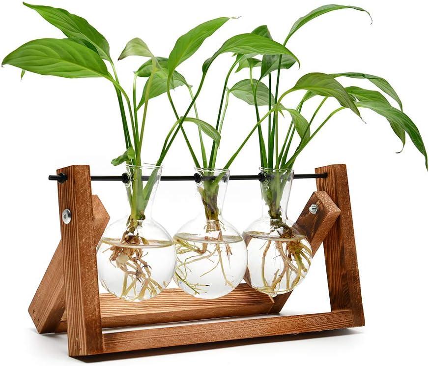 Live Plant Indoor Glass Vases - Air Plant Holder Hydroponics Vase with Wooden Stand House Plants Indoors Live for Home Office Decoration - 3 Bulb Vase (Vintage Wood)