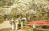 COLLECTIBLE POSTCARD: JAPANESE TEA GARDEN /SAN FRANCISCO /CALIFORNIA /**RARE**