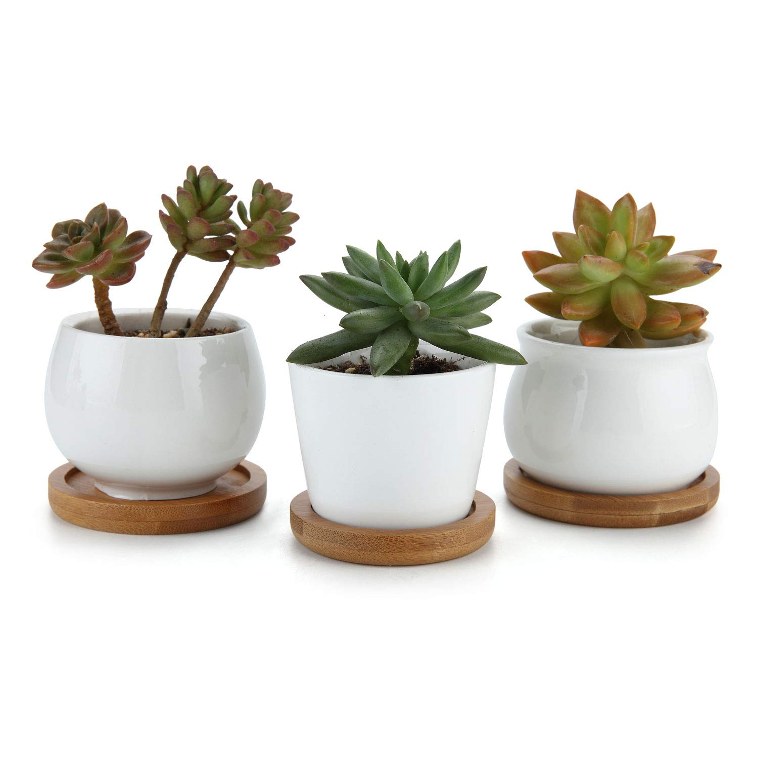 T4U 2.5 Inch Ceramic Pot White Set of 3, Succulent Plant Planter Cactus Plant Pot Flower Container Holder with Bamboo Trays Home Office Decoration