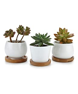 T4U 7cm Ceramic White Collection NO.31 Succulent Plant Pot/Cactus Plant Pot Flower Pot/Container/Planter with Bamboo Trays Package 1 Pack of 3