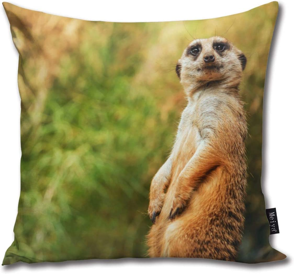 Elsaone Meerkat Funny Sitting Throw Pillow Covers Decorative Square Cushion Cases For Living Room Couch Bed 18 X 18 Inch 45 X 45 Cm Amazon Co Uk Kitchen Home