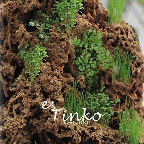 Las semillas de la hierba del jardín de rocalla 500pcs mezclar dos rocalla hierba hoja larga delgada y redonda de la hoja Enano de rocalla hierba jardín Bonsai ornamento Hierba: Amazon.es: Jardín