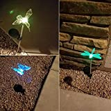 TUZECH Auto Colour Change Transparent Butterfly Solar Powered Rechargeable LED Lawn Garden Light Lamp Auto On Off Waterproof (6)
