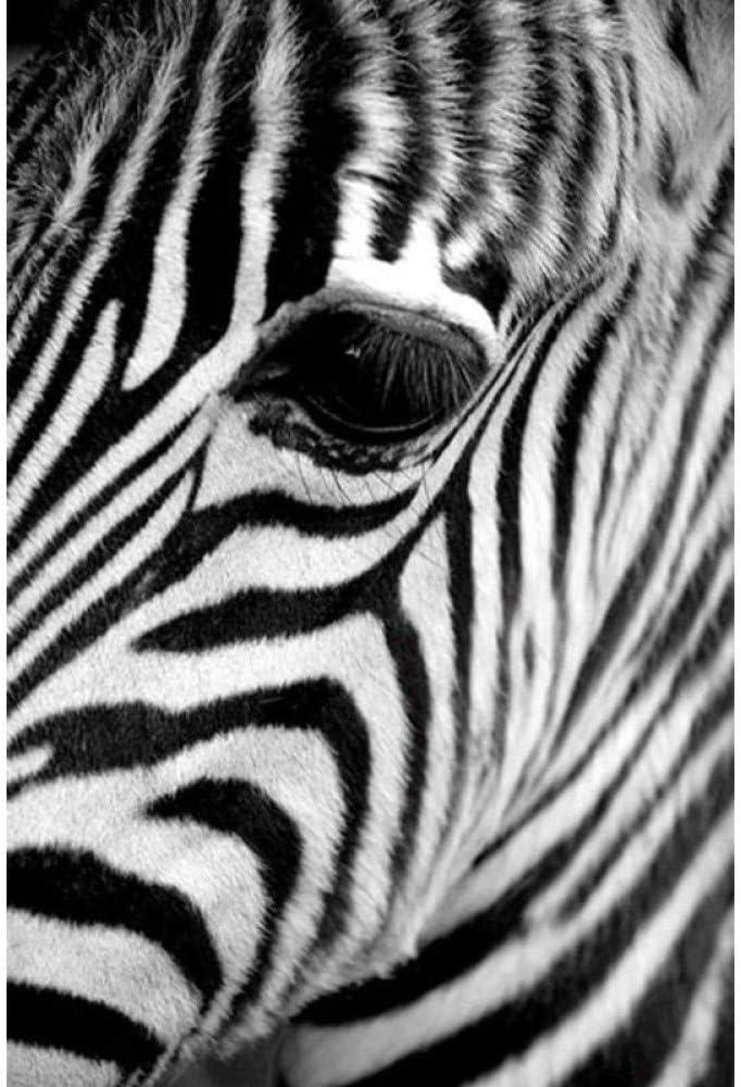 yhyxll Schwarz Und Wei/ß Skandinavischen Zebra Bilder Moderne Nordic Tier Wand Poster Kunstdruck Leinwand Malerei F/ür Hauptdekoration I 60X80 cm
