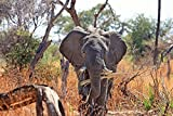 Home Comforts Framed Art for Your Wall Animal Africa Elephant Safari Proboscis 10x13 Frame