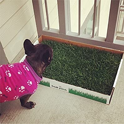 Disposable Dog Potty with REAL Grass - As Seen on SHARK TANK