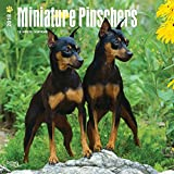 Miniature Pinschers 2018 12 x 12 Inch Monthly Square Wall Calendar, Animals Dog Breeds
