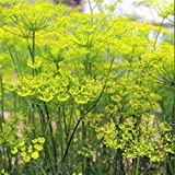 Outsidepride Fennel Herb Seed