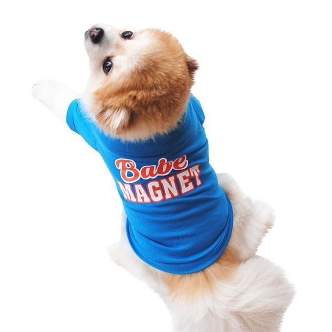 Ropa para Mascotas, ❤ Zolimx Animales Lindos Camisetas de Dibujos Animados Ropa para Perros pequeños: Amazon.es: Ropa y accesorios
