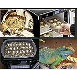 LOVSHARE 50W Reptile Egg Incubator 110V Chicken