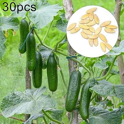 wpOP59NE 30Pcs Cucumber Seeds Delicious Nutritious Fruit Vegetable Garden Bonsai Plant - 30pcs Cucumber Seeds Plant Seeds : Garden & Outdoor