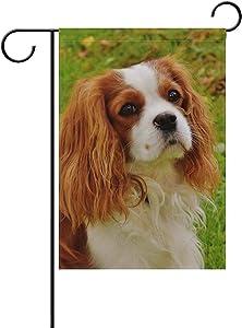 Dimanzo Cavalier King Charles Dog Polyester Garden Flag Banner for Outdoor Home Garden Flower Pot Decor
