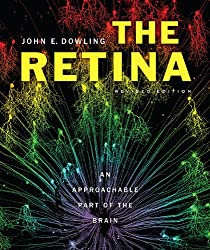 The Retina: An Approachable Part of the Brain