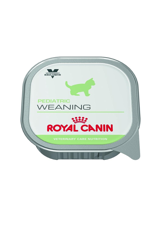 Pienso Húmedo Gato Weaning 12x195gr Royal Canin: Amazon.es ...