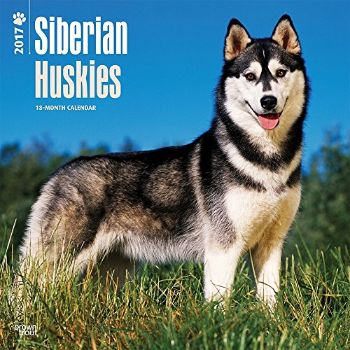 "Siberian Huskies 2017 Wall Calendar 12"" x 12"""