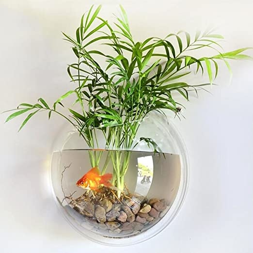 Amazon.com : Green Acrylic Round Wall Mounted Hanging Fish Bowl Aquarium Tank for Gold Fish and Beta Fish Plant Vase Home Decoration Pot, 15cm Diameter ...
